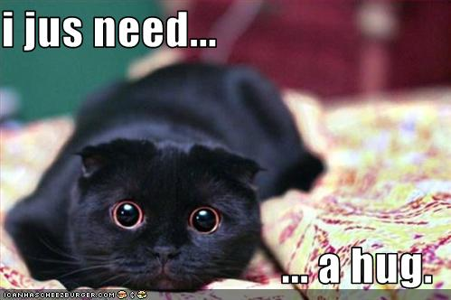 LOLCat-need-a-hugz